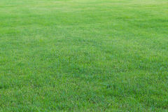 Grünes Gras im Garten (Weichzeichnung) Stockfotografie
