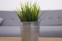 Grünes Gras im Metalltopf Stockbilder