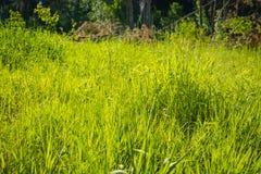 Grünes Gras im Park stockbild