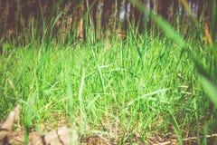 Grünes Gras im Park lizenzfreie stockbilder
