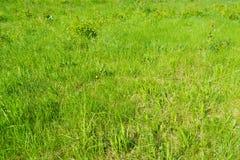 Grünes Gras im Park lizenzfreie stockfotografie