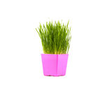 Grünes Gras im rosa Topf Lizenzfreie Stockbilder