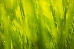 Grünes Gras im Sonnenlicht stockbild