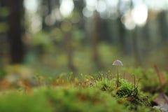 Grünes Gras im Wald Lizenzfreies Stockbild