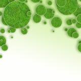 Grünes Gras kreist Hintergrund ein Stockbild