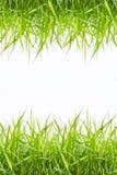 Grünes Gras lokalisiert Stockfoto