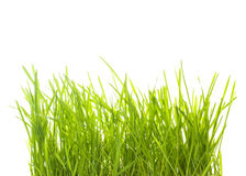 Grünes Gras lokalisiert Stockfotos