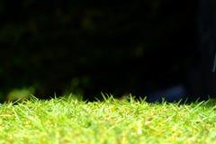 Grünes Gras lokalisiert auf schwarzem Hintergrund Stockfotos