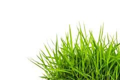 Grünes Gras lokalisiert auf Weiß. Stockbild