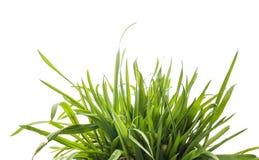 Grünes Gras, lokalisiert auf Weiß Lizenzfreies Stockfoto