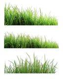 Grünes Gras lokalisiert auf weißem Naturhintergrund Lizenzfreies Stockfoto