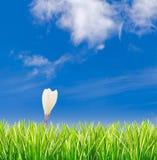 Grünes Gras mit alleinem Krokus gegen blauen Himmel Lizenzfreies Stockbild