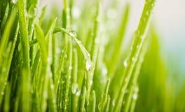 grünes Gras mit befeuchtet Tropfen Stockbilder