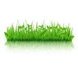 Grünes Gras mit Blättern lizenzfreie abbildung