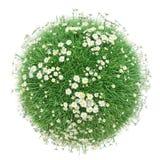 Grünes Gras mit Blumen, Welt gemacht mit Gras Lizenzfreies Stockfoto