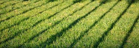 Grünes Gras mit dunklem Schatten des Zauns Leerer Hintergrund, Abschluss herauf Ansicht mit Details, Fahne Stockbild