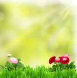 Grünes Gras mit Gänseblümchenblumen Stockbild