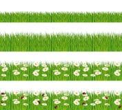Grünes Gras mit Gänseblümchen und Marienkäfern. Stockfoto