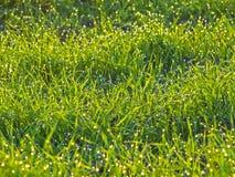 Grünes Gras mit glänzenden Wassertropfen Lizenzfreies Stockfoto