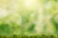 Grünes Gras mit grünem bokeh Stockfotografie