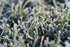 Grünes Gras mit Hoarfrost Stockbild