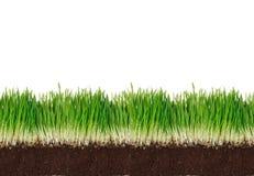 Grünes Gras mit Lehm Stockbild