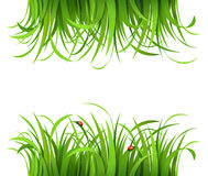 Grünes Gras mit Marienkäfern Stockfotos