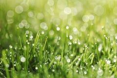 Grünes Gras mit Morgentau Stockfotos