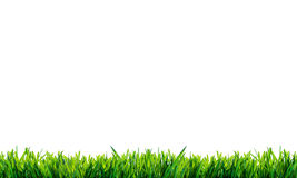 Grünes Gras mit Reflexion lokalisiert auf weißem Hintergrund Lizenzfreie Stockbilder