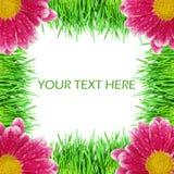 Grünes Gras mit rosafarbenen Farben Stockfotos