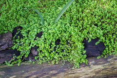 Grünes Gras mit Steinen lizenzfreie stockfotografie