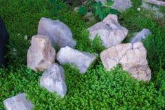 Grünes Gras mit Steinen lizenzfreie stockfotos