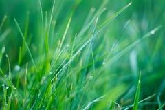 Grünes Gras mit Tau Stockbild