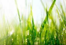 Grünes Gras mit Tautropfen Lizenzfreie Stockfotos