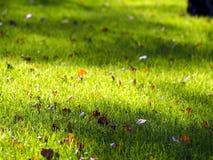 Grünes Gras mit toten Blättern Lizenzfreie Stockfotografie