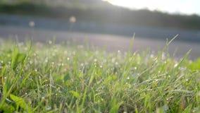 Grünes Gras mit Tropfen des Taus stock footage