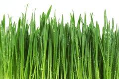 Grünes Gras mit Wasser Stockfoto
