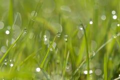 Grünes Gras mit Wassertropfen Lizenzfreie Stockbilder