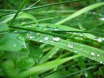 Grünes Gras mit Wassertropfen stockbilder