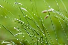 Grünes Gras mit Wassertropfen Stockfotografie