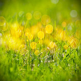 Grünes Gras-Muster Lizenzfreie Stockfotografie