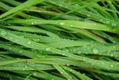 Grünes Gras naß Stockfoto