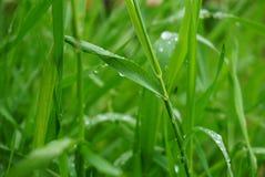 Grünes Gras naß Stockbild
