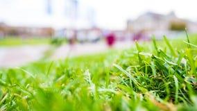 Grünes Gras, Nahaufnahmeschuss-Stimmungsfoto lizenzfreies stockbild