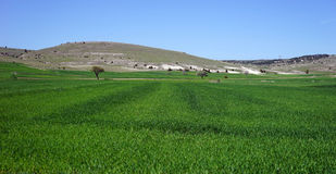Grünes Gras nahe Berg Lizenzfreie Stockfotos
