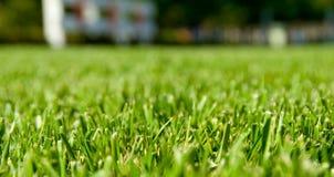 Grünes Gras-Perspektive mit Haus im Hintergrund Stockfotografie