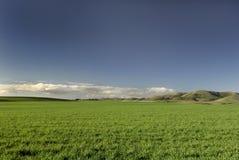 Grünes Gras u. blauer Himmel Stockfoto