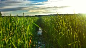 Grünes Gras u. Weidelandschaft Stockfotos