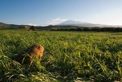 Grünes Gras und Ätna-Ackerland, Nahaufnahme Stockbilder