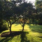 Grünes Gras und Stockbild
